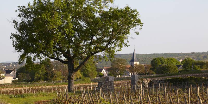 Village de Chassagne-Montrachet © Atelier photo Muzard