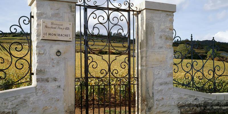 Vignoble Montrachet