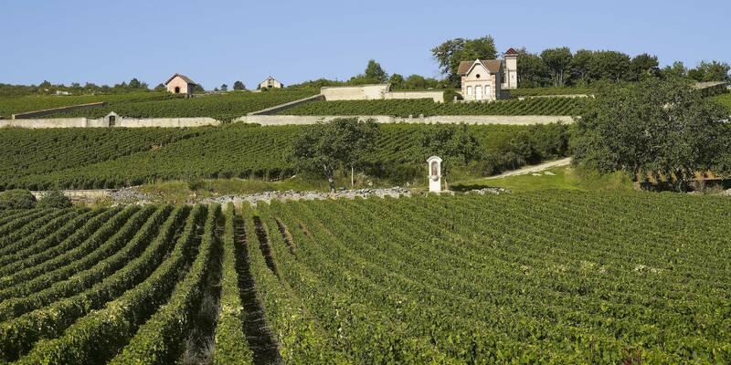 Vignes à Meursault