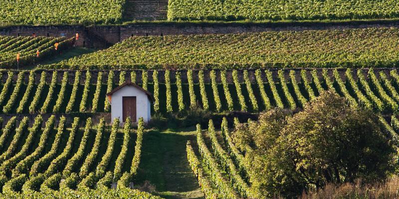 Climats du Vignoble de Bourgogne - Parcelles et cabiote