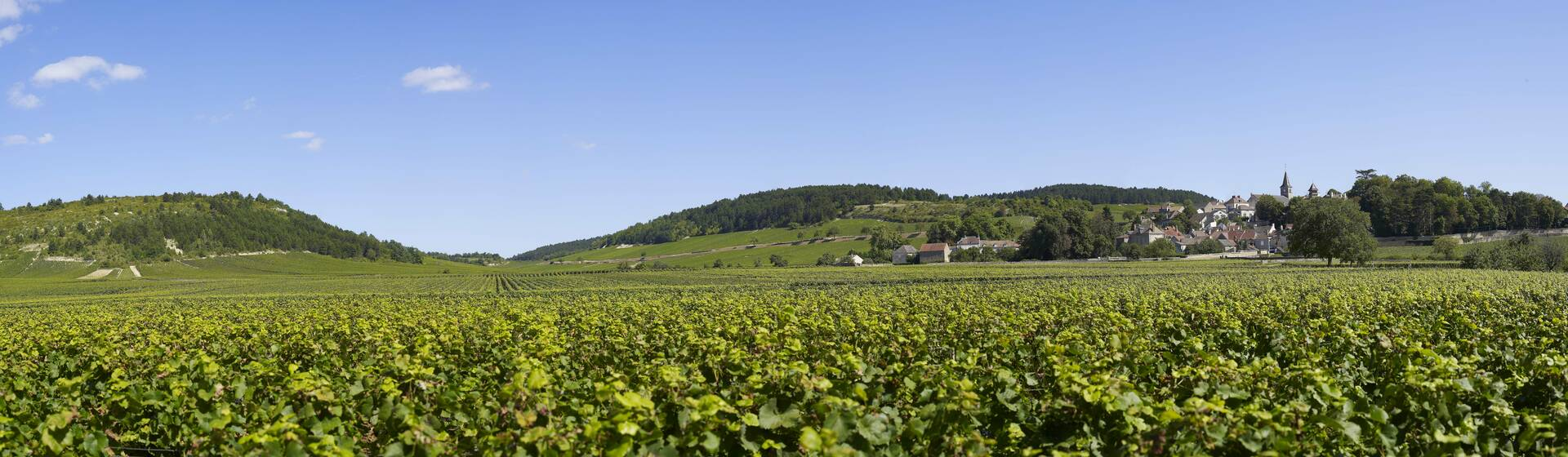 Marvelous Wine Tours In Burgundy !