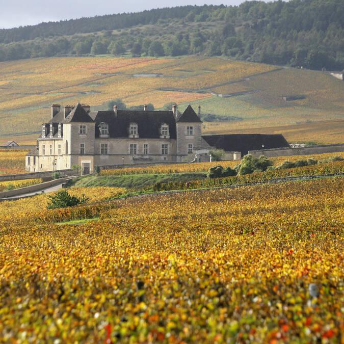 Clos de Vougeot,Vue des vignes
